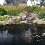 What Makes Me Happy: Koi Ponds