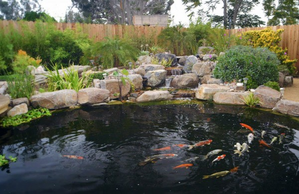 What Makes Me Happy: Koi Ponds