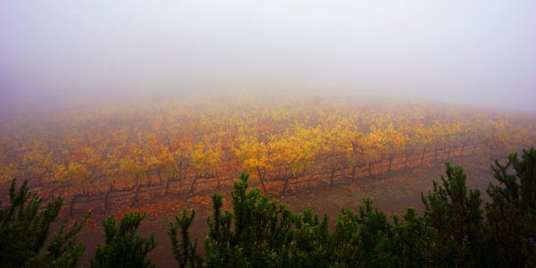 ca_wine_design-vinyards1