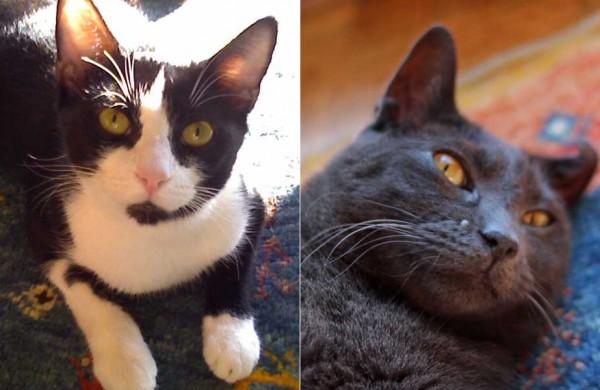 What Makes Me Happy: Pet Adoption